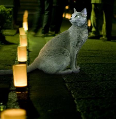 大晦日猫2