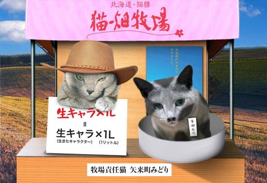 回顧猫19
