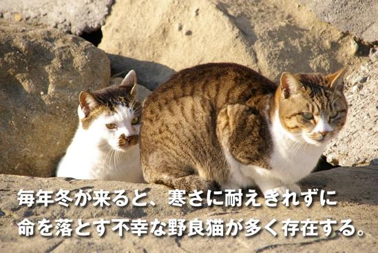 プロジェクトX猫6