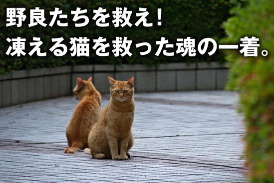 プロジェクトX猫4