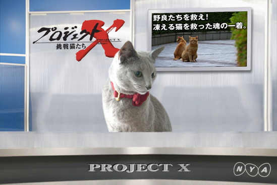 プロジェクトX猫5