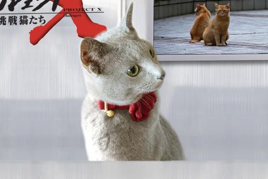 プロジェクトX猫3