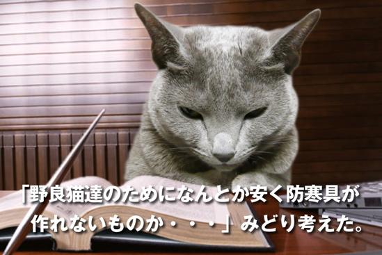 プロジェクトX猫11