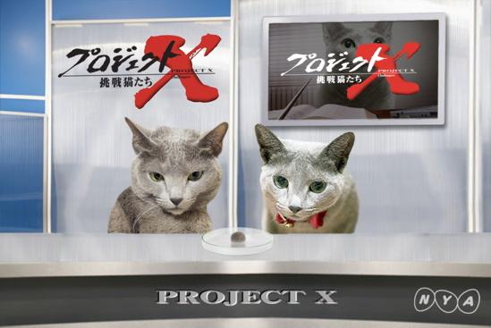 プロジェクトX猫17