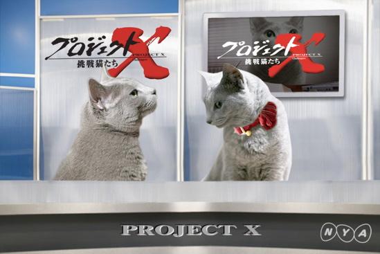 プロジェクトX猫15