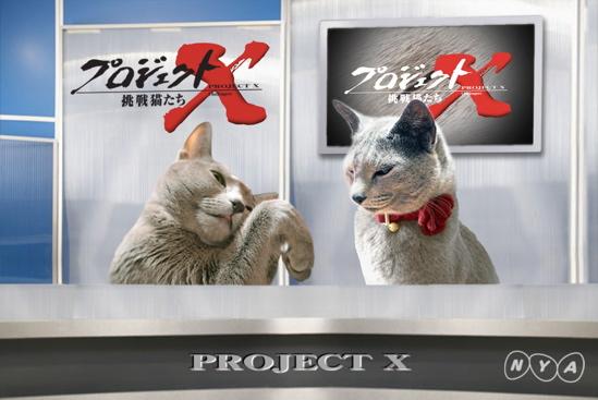 プロジェクトX猫24