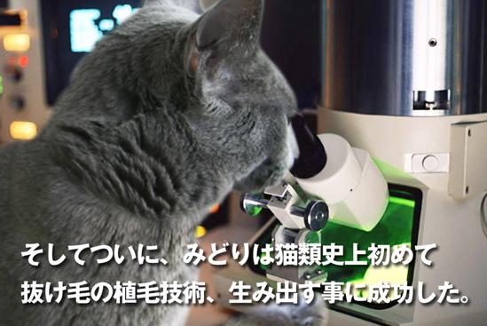 プロジェクトX猫20