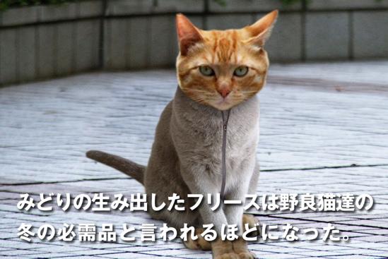 プロジェクトX猫31