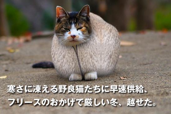 プロジェクトX猫30