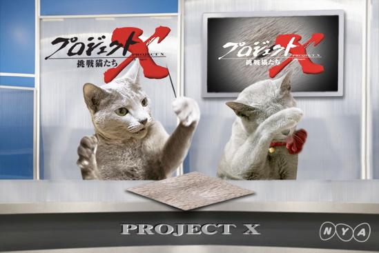 プロジェクトX猫28
