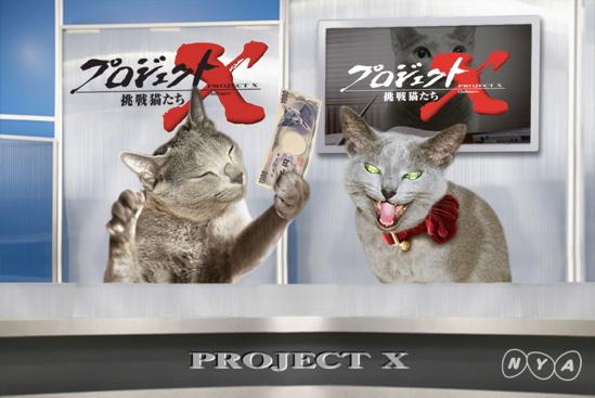プロジェクトX猫36