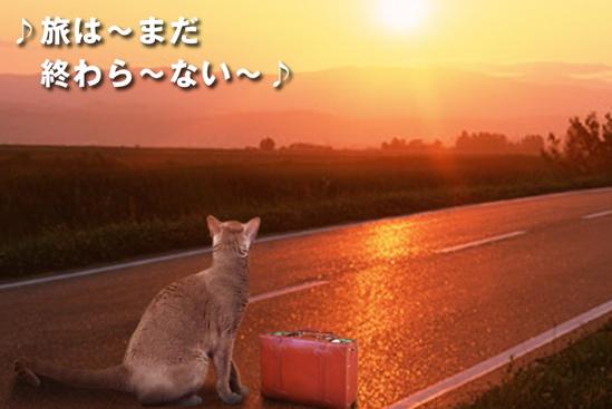 プロジェクトX猫39