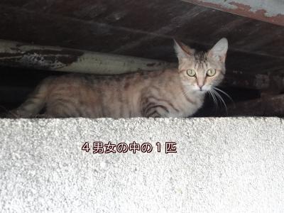 18d8.jpg