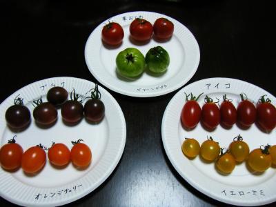 トマト講座