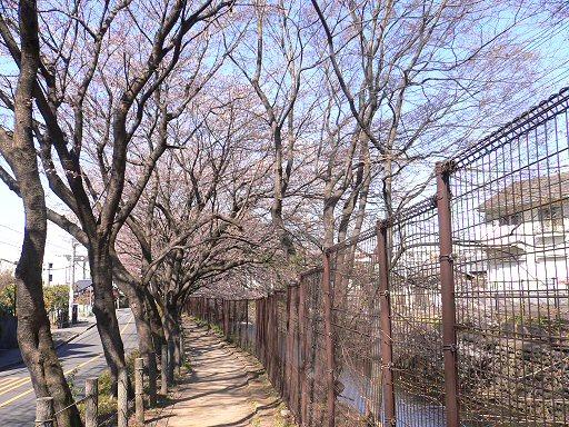 桜P1040866
