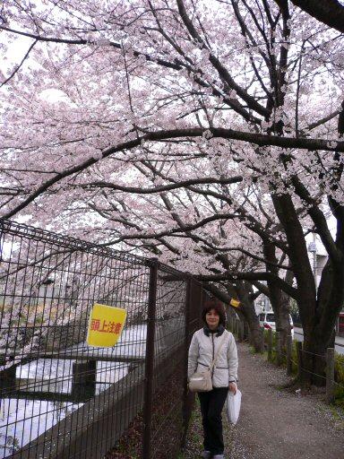 桜1P1050003