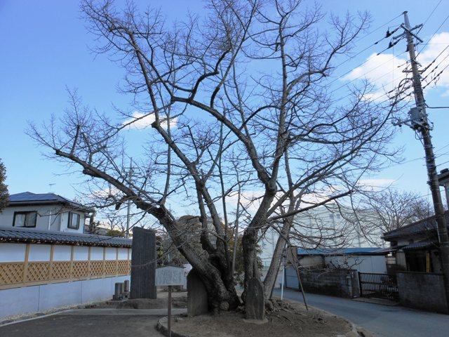 光明寺20130211005