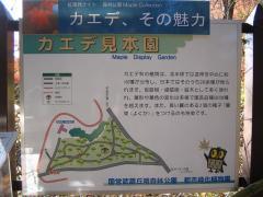 kouyou-sinrin091115-101