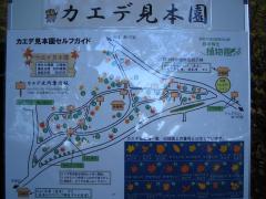 kouyou-sinrin091115-102