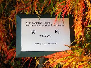 kouyou-sinrin091115-217