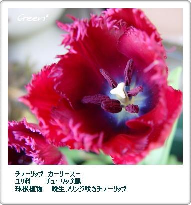 350ca-ri-su-20110513f1.jpg