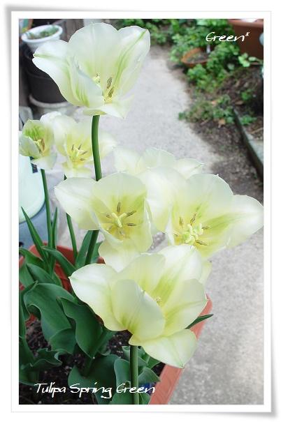 350springgreen20110508e1.jpg