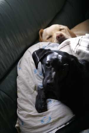 昼寝 姉妹