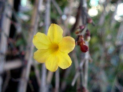黄色い可憐な花です@たいやきあきちゃん