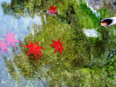 能仁寺の紅葉4