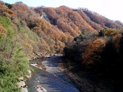 赤平川ようばけ付近の紅葉