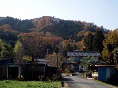 裏山は紅葉です@高見屋(小川町)