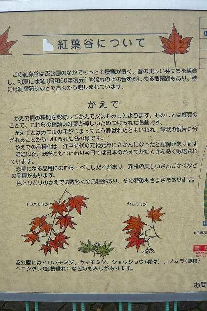 shibakoen01.jpg