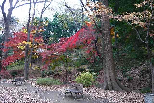 shibakoen02.jpg