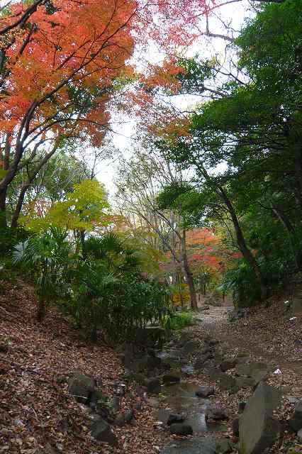 shibakoen06.jpg