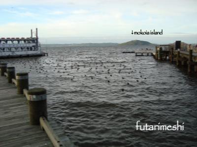 ロトルア湖 mokoia island