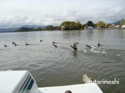 ロトルア湖 ペダルボート