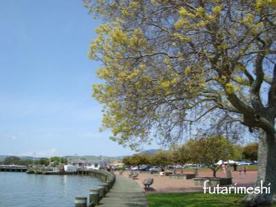 lake rotorua oct2010