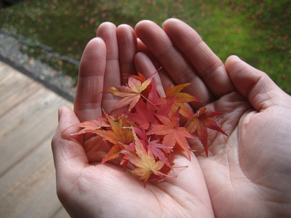 手のひら紅葉