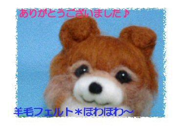 チワワちゃん茶色4