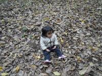葉っぱいっぱいね~。