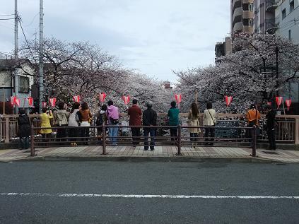 100400中目黒桜並木S15 006