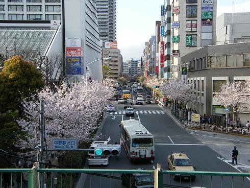 中野駅北口の桜