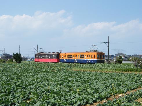 キャベツ畑を行く銚子電鉄