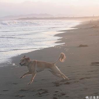 犬RIMG0178
