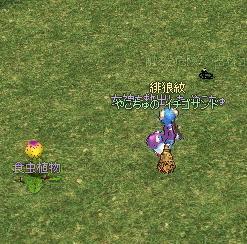 yako227.jpg