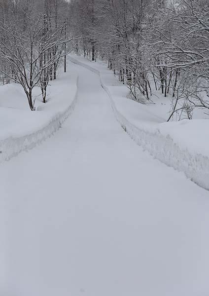 ホワイトカーペット