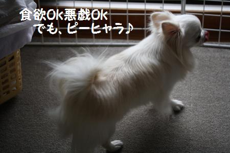 IMG_8329.jpg