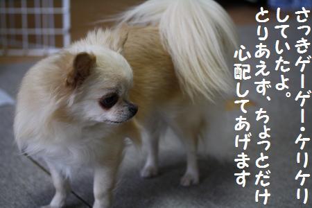 IMG_8333.jpg