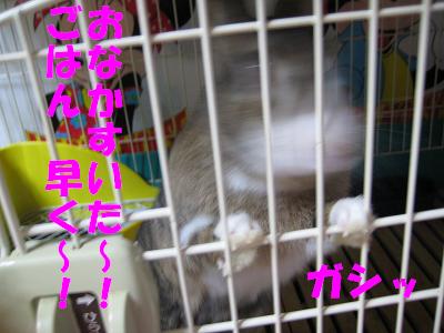 IMG_晩ご飯4415