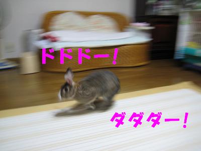 IMG_走る4462
